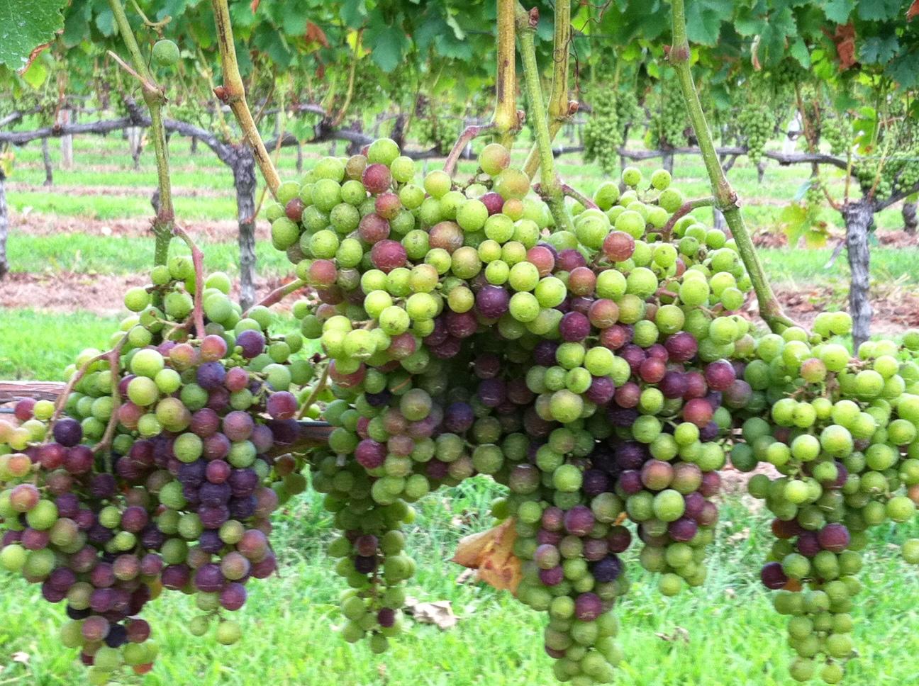 Long Island Wine Tours Tripadvisor